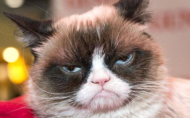grumpy_cat__3481823b
